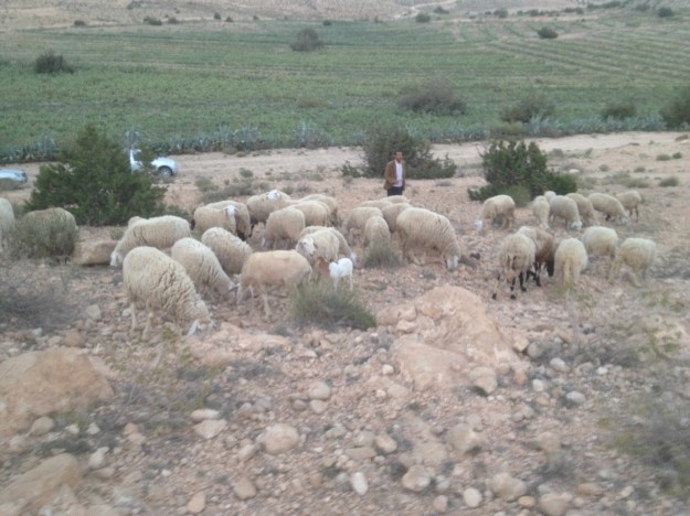 Moutons-montagnes