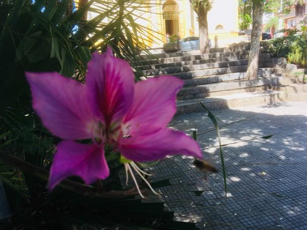 Piracaia fleur